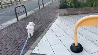 ツムツム。散歩始めのダッシュ💨